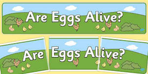 Are Eggs Alive Display Banner